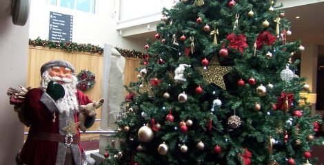 Christmas trees in Sligo